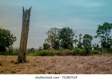 Dry ground with large stumps.