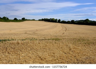 Dry harvested crop field during the UK summer heatwave 2018