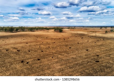 Dry harvested and cropped farm land field near Moree regional agricultural town on artesian basin in Australian NSW outback. Black soils feed black angus bulls - cattle.