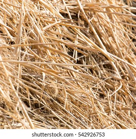 dry hay as background