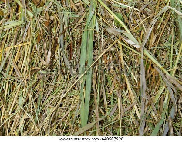 dry hay background