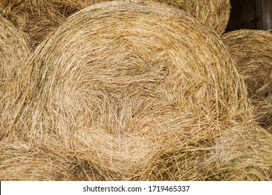 Dry hay forage for animals