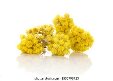 Fleur d'italicum de Helichrysum sèche. plante immortelle isolée sur fond blanc.