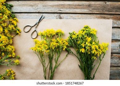 Dry herbs for use in alternative medicine, phytotherapy, herbal cosmetics. Bunches of dried flowers Hypericum. St. Johns wort. Herbal medicine. Medicinal herbs are dried.
