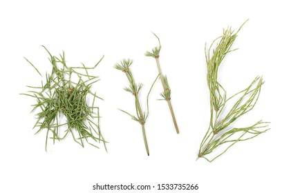 Dry horsetail fern, (Equisetum arvense) isolated on white background, top view