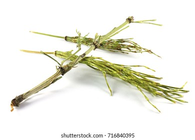 Dry horsetail herb (Equisetum arvense). The plant is a useful diuretic when taken internally and is used in the treatment of kidney and bladder problems, cystitis, urethritis and prostate disease.