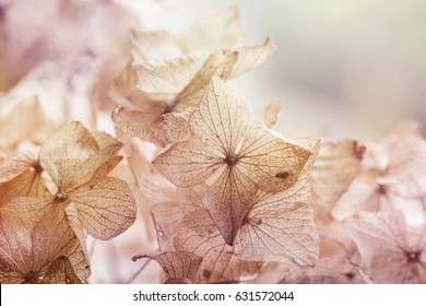 dry hydrangea floral background