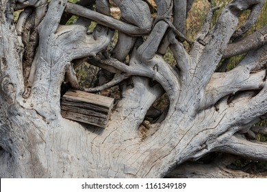 Dry interwoven roots of a large tree