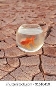 The dry land on the aquarium and goldfish