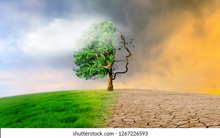 dry land tree climate change
