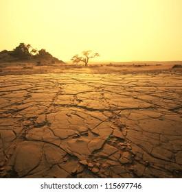 dry landscape