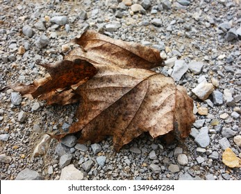 Dry leaf alone standing on gravel in autumn symbolizing the evanescence