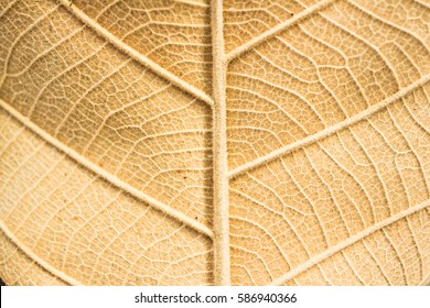 Dry leaf background. Yellow leaves pattern. - Shutterstock ID 586940366