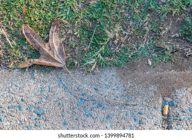 A dry leaf and a cigarette butt discarded in the outdoors image with copy space