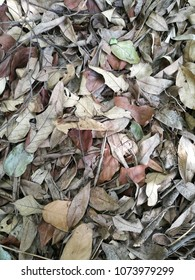 dry leaf fall on the floor