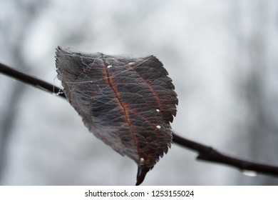 A dry leaf hanging on a tree branch. Gloomy view on an autumn morning
