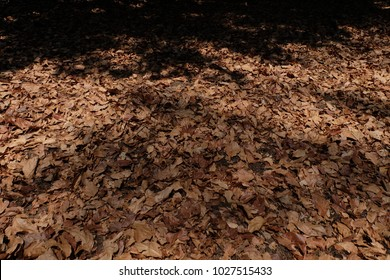 Dry leaf on the floor, background
