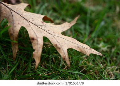 Dry Leaf on green grass - dead & oldage