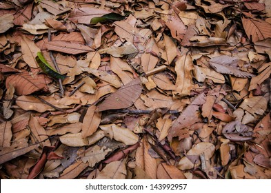 Dry leaf on the ground , Nature background and texture