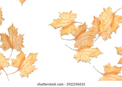 dry leaf on top view, isolated white background