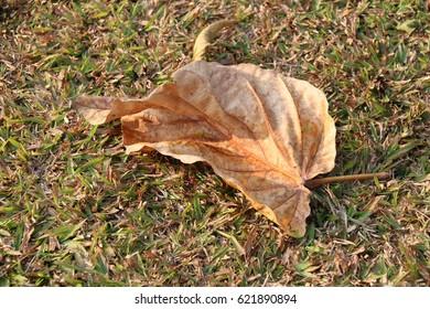 Dry leaf put on the ground