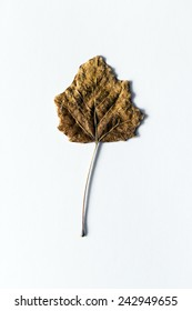 Dry leaf with shadow, vertical composition