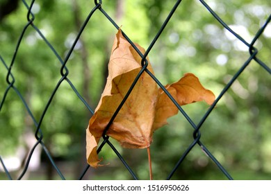 a dry leaf stuck in fence