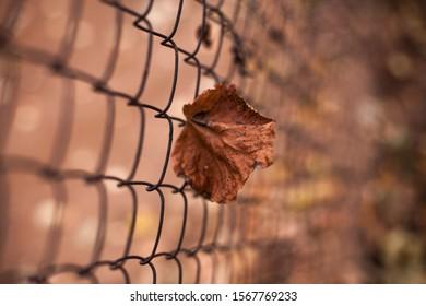 Dry leaf stuck in the fence. Image for desktop.