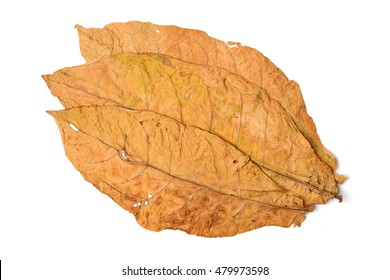 dry leaf tobacco closeup on the white background