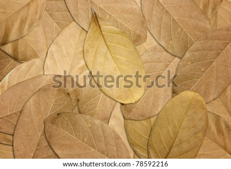 Dry leaves autumn background