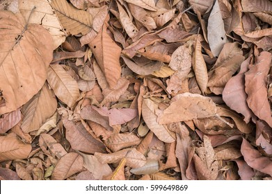 Dry leaves background - Shutterstock ID 599649869