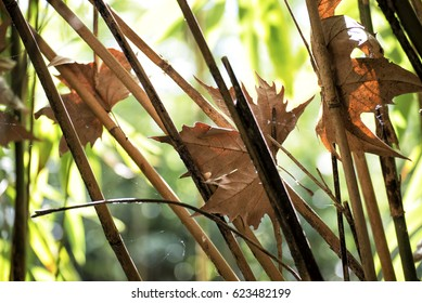 dry leaves between the branches