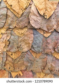 Dry leaves brown shade color autume texture background
