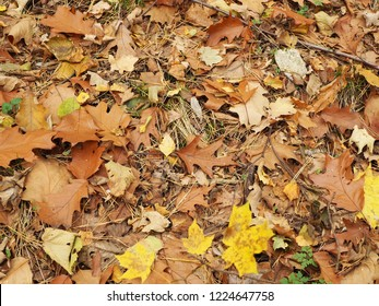 A lot of dry leaves from different trees in close proximity, autumn foliage, background