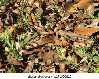 Dry leaves fallen on the grass