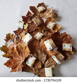 dry leaves forming the shape of a tree and european banknotes