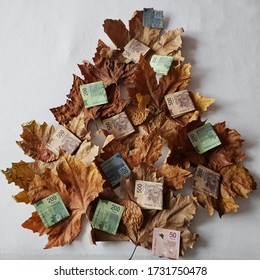 dry leaves forming the shape of a tree and Mexican banknotes