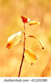 dry leaves, golden autumn