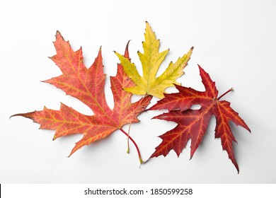 Dry leaves of Japanese maple tree on white background, top view. Autumn season