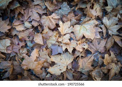 Dry leaves on the ground