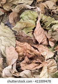 dry leaves on ground in autumn garden - Shutterstock ID 411009478