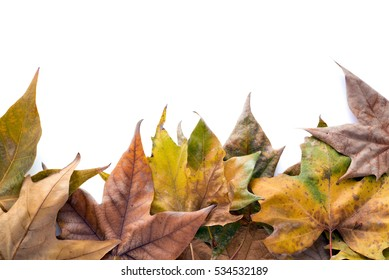Dry leaves on white background, space for copy