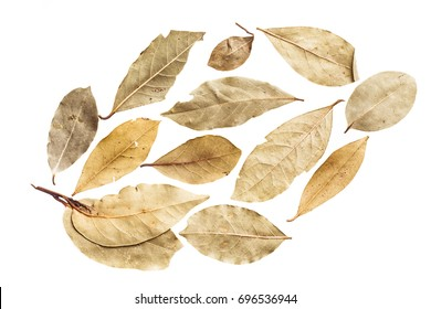 Dry leaves on white background by top view.