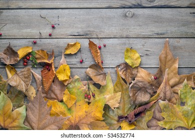 Dry leaves on a wooden background, space for copy