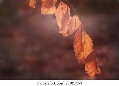Dry leaves transparent in light on soft backgrounds