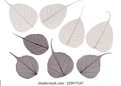 the dry leaves of a tree on a white background