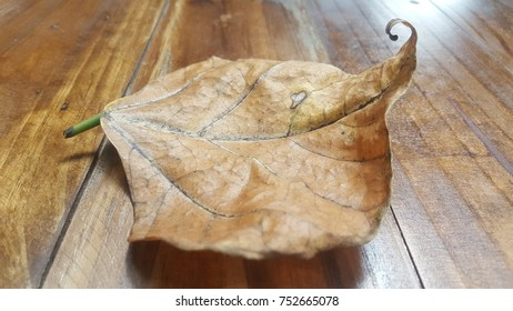 Dry leaves in winter