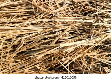 Dry leaves.Background. Natural texture.