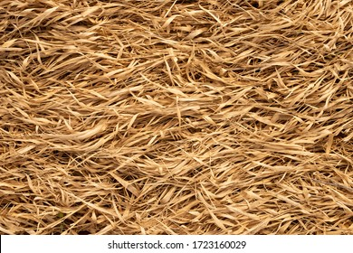 dry light yellow straw texture background, vintage style for design