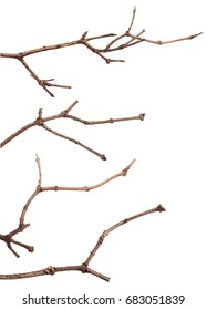 Dry lilac branches isolated on white background. Set
